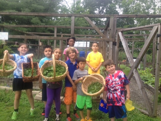 2nd graders with their crop of greens for